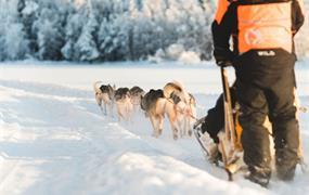 Zimní Helsinky a Polární Kruh - vlakem i s psím spřežením