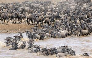 Safari v Keni - Velká migrace