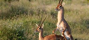 Safari v Tsavo West a pobyt u moře - 3 noci safari a 7 nocí moře.