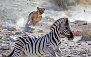 Namibie dechberoucí a dojemná - s českým průvodcem