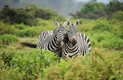 Nejvyšší hory Afriky a safari - Mt. Keňa a Kilimandžáro