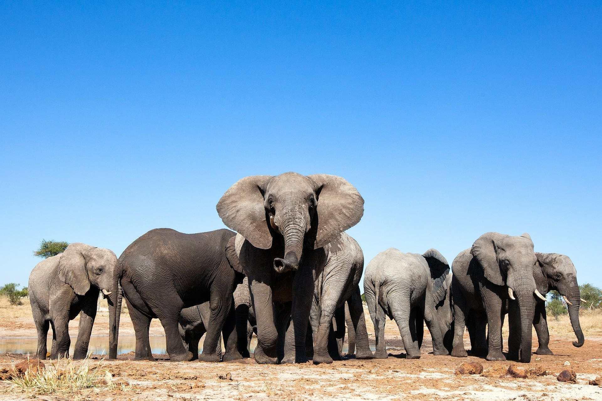 seznamování lokalit botswana vtipné online seznamky bios