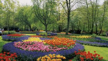 Holandská květinová pohádka - květinové korzo