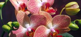 Drážďany - výstava orchidejí (pro skupiny)