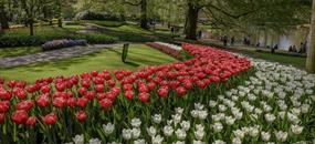 Jarní Holandsko s květinovým korzem