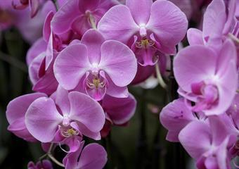 Drážďany - výstava orchidejí