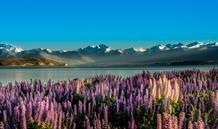 Nový Zéland a velká města Austrálie