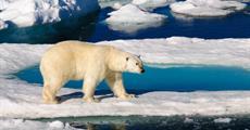 Na Severní pól