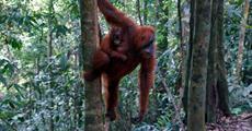 Sumatra - nespoutaná Indonésie