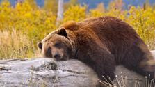 Aljaška, Yukon - volání divočiny