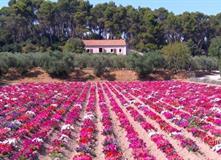 Provence májová na kole