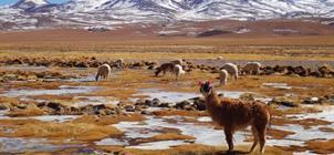Peru a Bolívie – turistika
