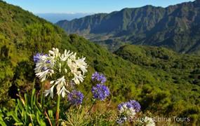 Přechod kvetoucí Madeiry