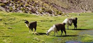 Národní parky Patagonie - podzim 2018