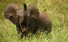 Gabon – putování do nitra černé Afriky