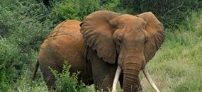 Safari v Keni, Tanzanii a Zanzibar