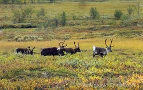 Švédsko – volání divočiny