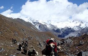 Bhútán – Laya Gasa trek