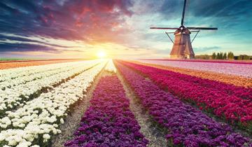 Holandsko plné barev a květů