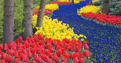 Holandsko Květinové korzo 2019, Amsterdam, Keukenhof, Zaanse Schans, Delft, Rotterdam, Antwerpy