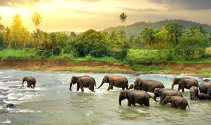 Cesta za Perlou Indického oceánu