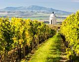 Pěšky mezi moravskými vinicemi