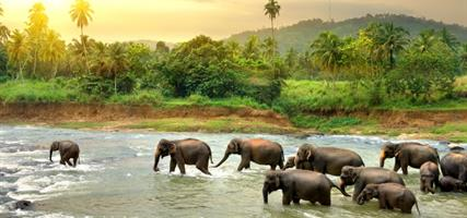 Srí Lanka - Cesta za Perlou Indického oceánu