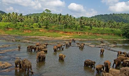 Přírodní bohatství Srí Lanky