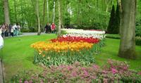 Květinové korzo - Keukenhof a Amsterdam *