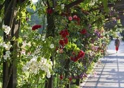 Slavnost růží v Badenu a vodní hrad Franzesburg u Vídně