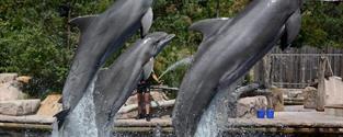 Delfinárium a ZOO v Norimberku