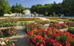 Slavnost růží v lázních Baden – den plný květů a vůní