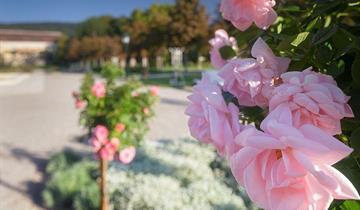 Slavnost růží v lázních Baden aneb den plný květů a vůní