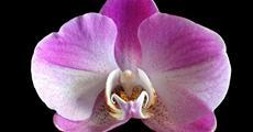 Světová výstava orchidejí