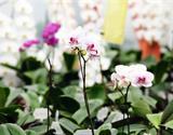 Výstava orchidejí v Drážďanech