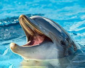 Delfinárium Norimberk