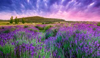 Levandulová Provence s možností koupání