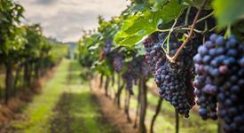 Pohoří Mátra a vinařské město Eger