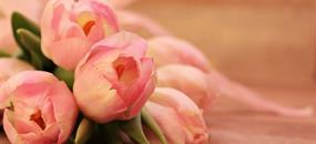 Květinová výstava v Tullnu