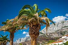 Jednodenní koupání Makarska