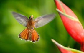 Národní parky Kostariky#
