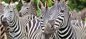 Keňa, Tanzánie a Zanzibar - safari s odpočinkem