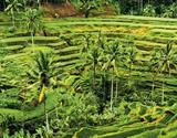 Bali - ostrov bohů