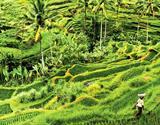 Borneo, Jáva a Celebes - sundský stroj času