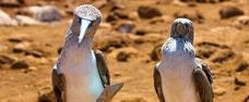 Galapágy - galerie zvířat
