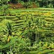 Jáva a Bali - V krajině batikování ***