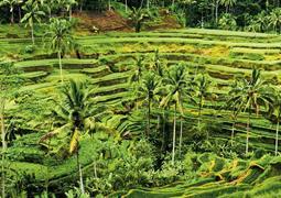 Jáva a Bali - V krajině batikování