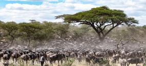 Keňa - Hakuna Matata!