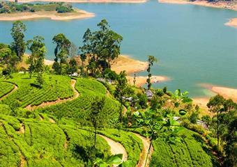 Srí Lanka - slza z tváře Indie de luxe
