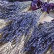 Provoněná Provence